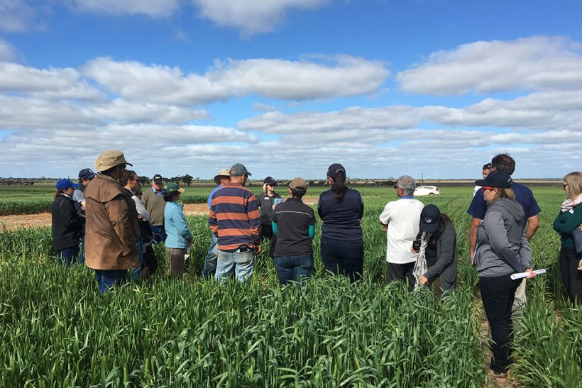 Wheatbelt farmers fund independent R&D